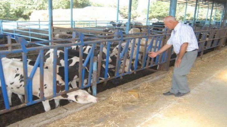 Bayındırlı süt üreticisinden rekabet çağrısı!
