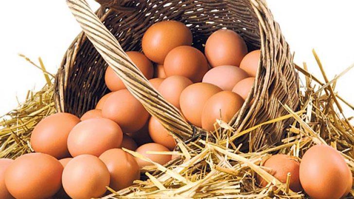 Yumurta fiyatları yükselişe geçti!