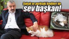 Sokak ve parktaki kedileri de sev başkan!