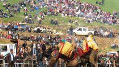 Ödemiş Konaklı deve güreşleri Pazar günü yapılacak