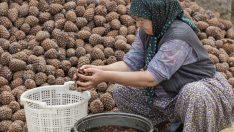 Kozak Yaylası Doğal Yaşam Parkı kuruluyor
