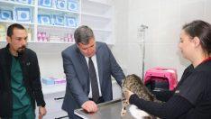 Çeşme'de sokak hayvanları için veteriner kliniği açılıyor!