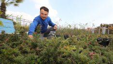 Gaziemir'de Küresel ısınmaya karşı çalı üretilecek