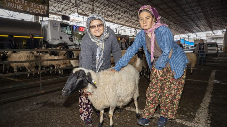 Torbalı'da çiftçilere 173 hayvan dağıtıldı