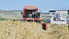 Menemen'de hasat bayramı