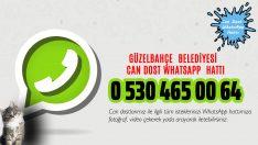 'Can Dost WhatsApp Hattı' Hizmette