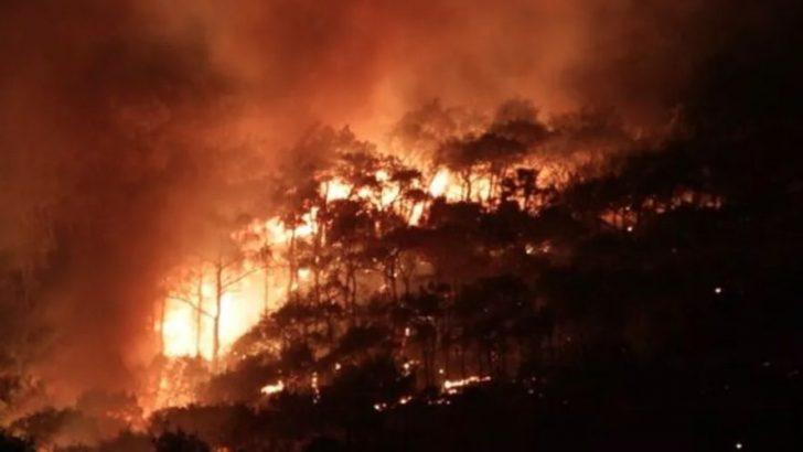Ayvalık orman yangınında son durum