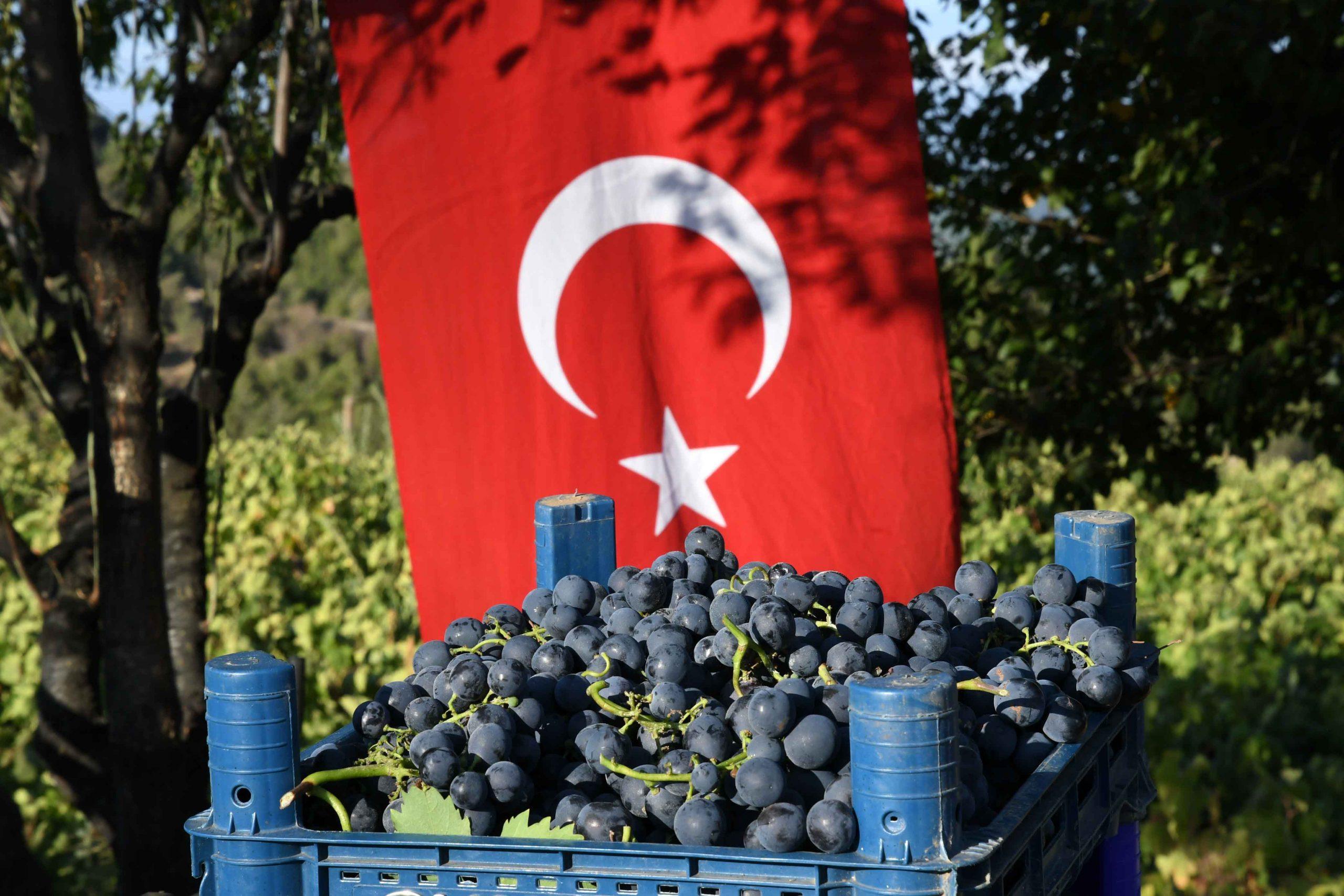 Kavacık Üzüm Festivali bağbozumuyla yaşatıldı