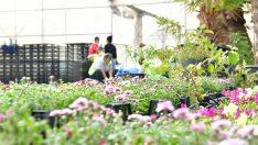 Çiğli Belediyesi Kendi Çiçeğini Üretiyor
