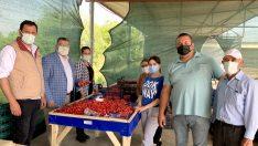 """""""Kiraz Üreticisini Pandemi Değil Pazara Müdahaleler Bitiriyor"""""""