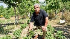 Bornovalı çiftçiye yerinde destek sürüyor