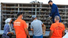 Seferihisar'da Türkiye'ye örnek bir hayvancılık projesi.