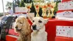 İzmirli hayvanseverler FestPati Buca'da buluştu